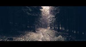 Road in the Woods by Artush