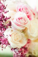 Delicate Roses by Natany