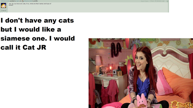 Cats Question 4 by Ask--CatValentine