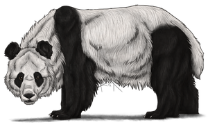 Giant Panda by Riixon