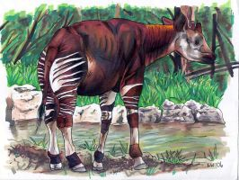 okapi by EatToast