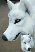 white wolf quad closeups by LilleahWest