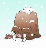 December 1st: Piloswine and Swinub EDIT