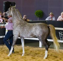 STOCK - 2014 Total Equine Expo-109 by fillyrox