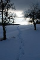 Cold path by HobbyFotograf