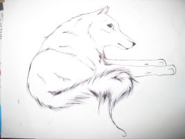 wolf drawing 2 by TheNewCoyote
