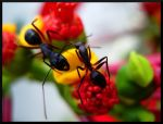 Tango of the ants by Avinash