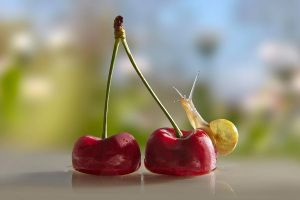 Snail on cherry by savePunisher