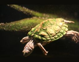 Turtle Stock 01 by cypherstock