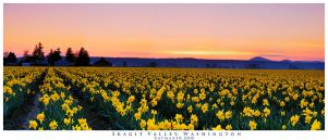 Skagit Valley by Raymaker