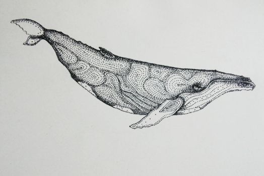 Humpback Whale by artifexToils