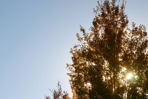 Treetop in the Fall by esthermyla