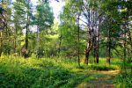 Forest by Hudojnica
