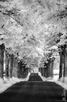 infrared road and truck by jeje62