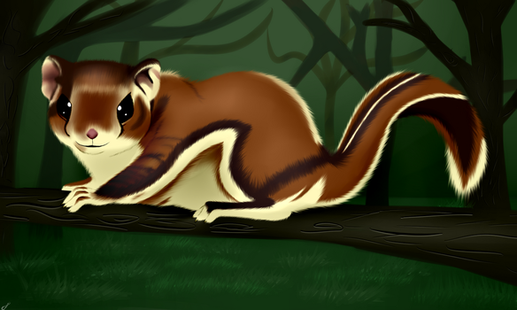 Flying squirrel by torikaze