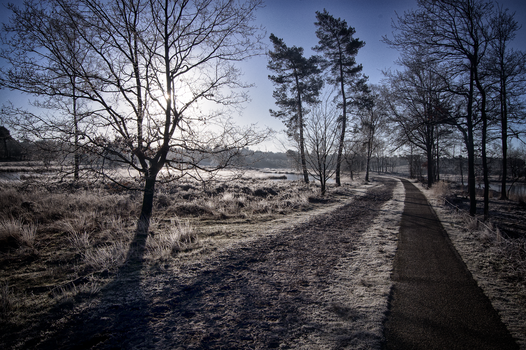 .: A Frosty Day :. by syntheticdreamer