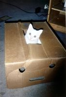 Cat in the box by TokenArt