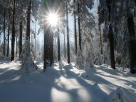 STOCK Winter Harz/Germany 3 by Inilein