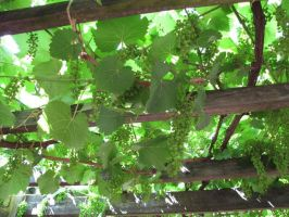 Hanging grapes by paint-and-pen-key
