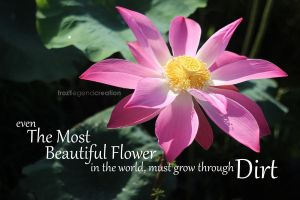 The Most Beautiful Flower by froztlegend