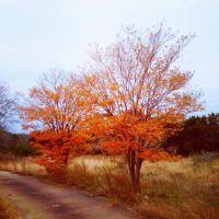 Fall Day by TheGerm84