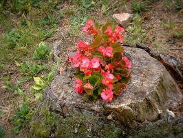 Flowers Growing in an Old Stump by rjDezigns