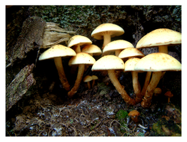 Family of Mushrooms by DayDreamsPhotography