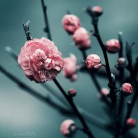 Same Season by JunJun510