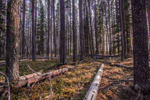 Forest Clearing by oddmountain
