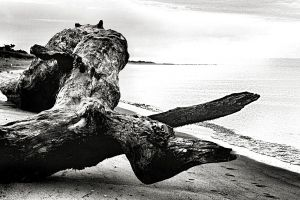 driftwood by Moon-Willow