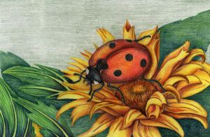 Ladybird on sunflower by fatboygotsick