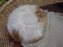 kitty in a basket!!! by Cindercorn