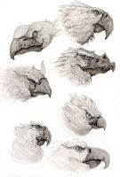 Bird Faces by TylerJustice