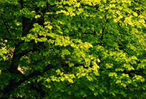 Green. by m3tzgore