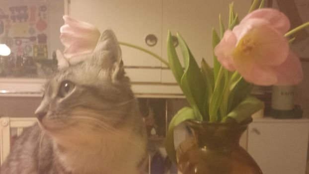 Posing Cat and Tulips by TimLavey