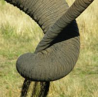 Elephants Tail by Jenvanw