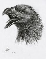 Eagle Drawing I by Bilgekhan