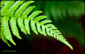 A Love of Ferns by GlassHouse-1