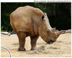 Ted the biped Rhino by HumanDescent