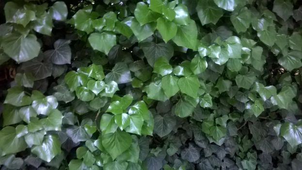 Leaves by Spiniosa