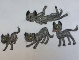 Ravenpaw's Lifeline by Infected-Shadows