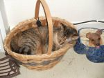 Sonic the Cat in the Basket by GameGeek95