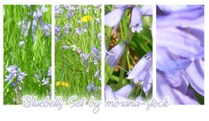 Bluebells Set by morana-stock