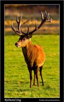 Richmond Stag by Andrew-and-Seven