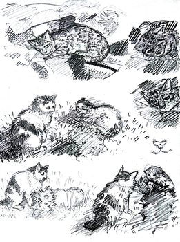 (2017) sketches of cats by Solnc