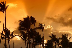 palms in the evening by archaeopteryx-stocks