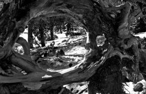 Through The Roots by Allen59