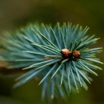 Pine Cone Babies by monotone2k