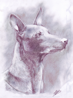 The Pharaoh's Hound by alexandrabirchmore