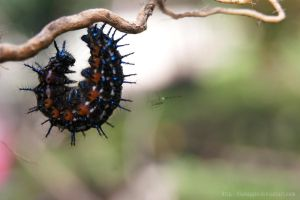 caterpillar II by dianapple